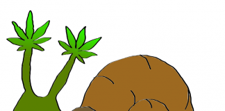 is weed legal in France