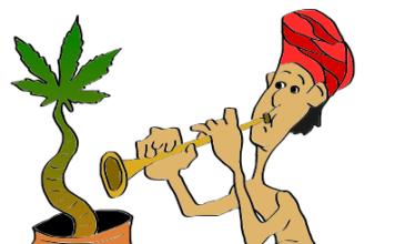is marijuana legal in India